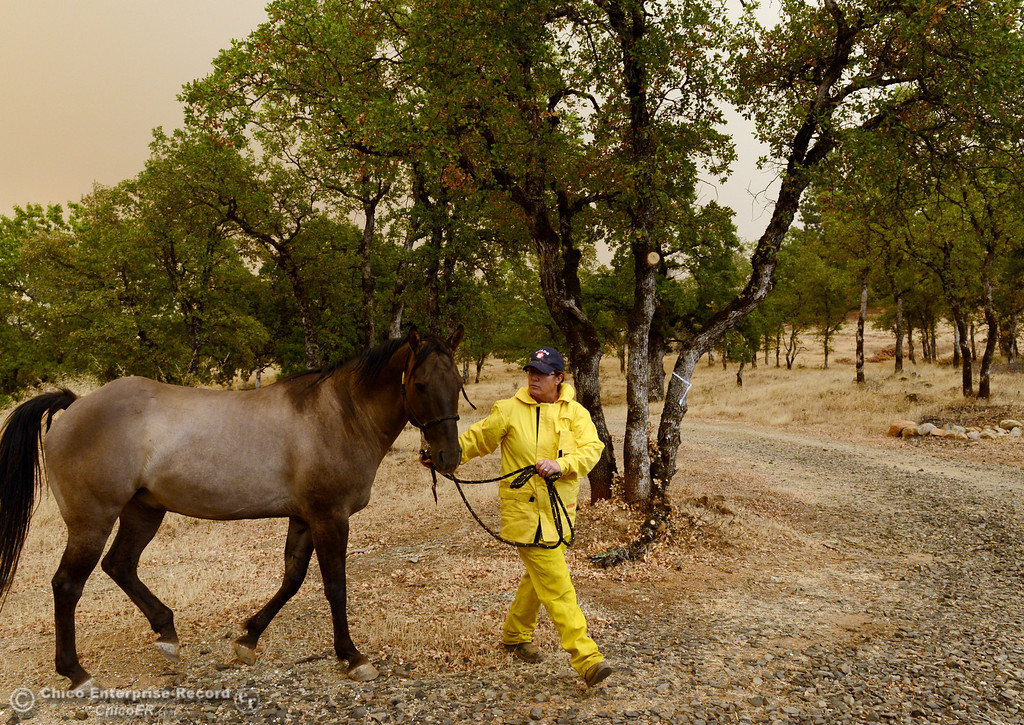 Description of . North Valley Animal Disaster Group Maureen Milligh (right) helps Jim Berglund transport his horse Mojo from the mandatory evacuation areas around the Swedes Fire southeast of Oroville that were expanded just after noon Saturday, August 17, 2013 in Oroville, Calif.  (Jason Halley/Chico Enterprise-Record)