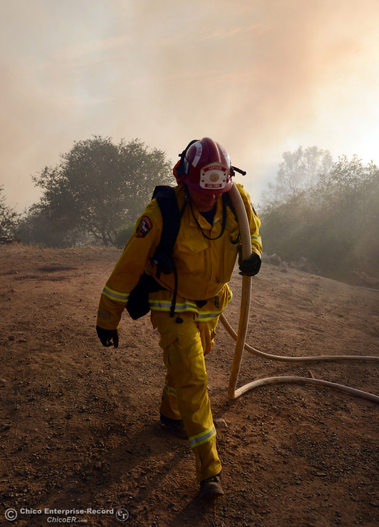 Description of . Cal Fire Capt. Russ Palamaryuk carries a hose line to protect a structure threatened by the Swedes Fire that burned along Swedes Flat Road, in the vicinity of Chinese Wall Road, just east or Oro Bangor Highway Friday, August 16, 2013 in Oroville, Calif. Over 200 acres were burned with at least one structure lost. (Jason Halley/Chico Enterprise-Record)