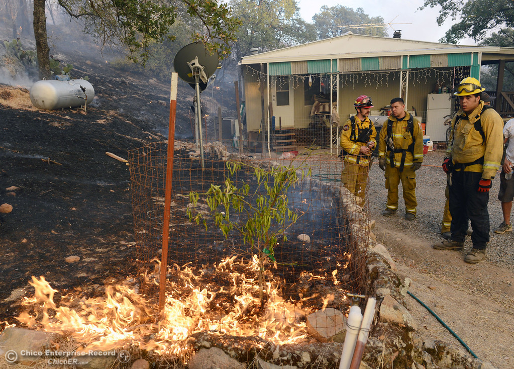 Description of . El Medio firefighters Capt. Donald Robinson, Alex Otani and Brenden Perez (left to right) watch the flames reaching close to the home of Glenn Bentley along Chinese Wall Road as the Swedes Fire burned along Swedes Flat Road, in the vicinity of Chinese Wall Road, just east or Oro Bangor Highway Friday, August 16, 2013 in Oroville, Calif. Over 200 acres were burned with at least one structure lost. (Jason Halley/Chico Enterprise-Record)