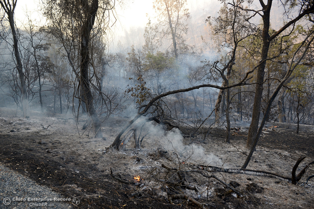 Description of . The Swedes Fire burned along Swedes Flat Road, in the vicinity of Chinese Wall Road, just east or Oro Bangor Highway Friday, August 16, 2013 in Oroville, Calif. Over 200 acres were burned with at least one structure lost. (Jason Halley/Chico Enterprise-Record)
