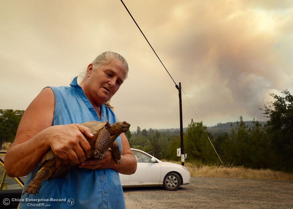 Description of . Sharon Carson holds her desert tortoise