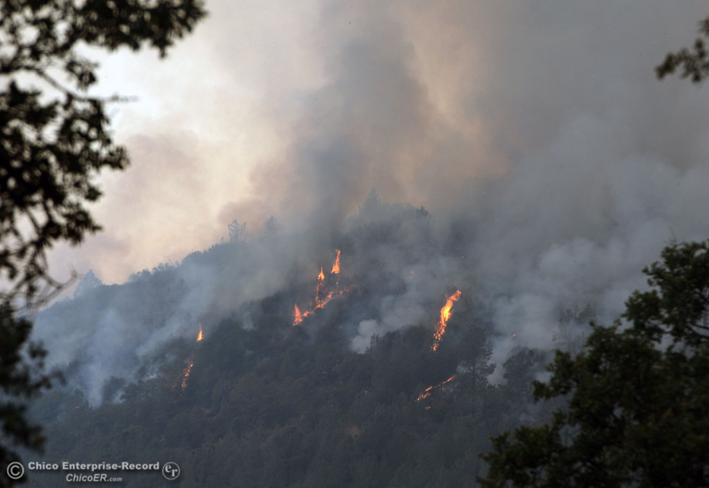 Description of . Flames shoot up from the trees west of Hurleton Swedes Flat Rd. in the mandatory evacuation areas around the Swedes Fire southeast of Oroville that were expanded just after noon Saturday, August 17, 2013 in Oroville, Calif.  (Jason Halley/Chico Enterprise-Record)