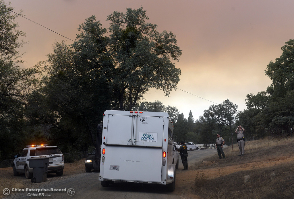 Description of . North Valley Animal Disaster Group drives along Hurleton Swedes Flat Rd. to retrieve two horses from the mandatory evacuation areas around the Swedes Fire southeast of Oroville that were expanded just after noon Saturday, August 17, 2013 in Oroville, Calif.  (Jason Halley/Chico Enterprise-Record)