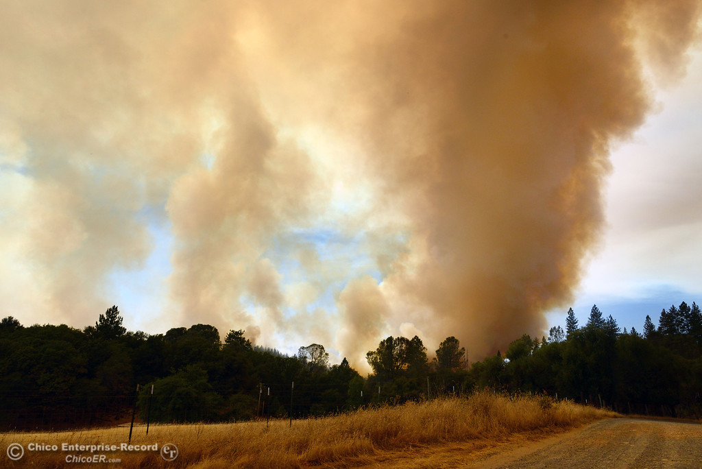 Description of . Smoke rises in the forest west of Hurleton Swedes Flat Road in the mandatory evacuation areas around the Swedes Fire southeast of Oroville that were expanded just after noon Saturday, August 17, 2013 in Oroville, Calif.  (Jason Halley/Chico Enterprise-Record)