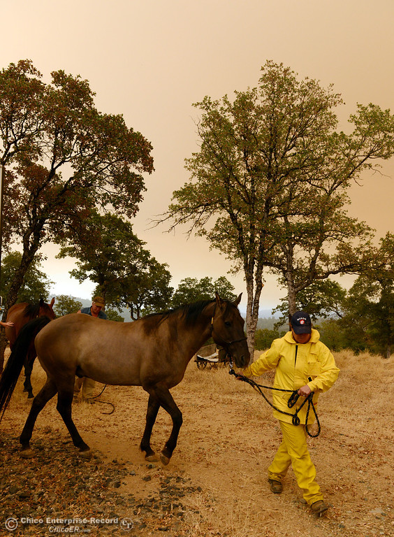 Description of . North Valley Animal Disaster Group Maureen Milligh (right) transports the horse Mojo as she helps Jim Berglund (back) transport his horse Gretta from the mandatory evacuation areas around the Swedes Fire southeast of Oroville that were expanded just after noon Saturday, August 17, 2013 in Oroville, Calif.  (Jason Halley/Chico Enterprise-Record)
