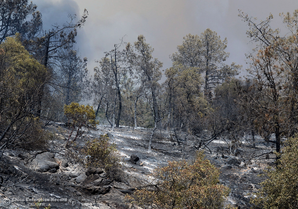 Description of . Charred remains of the Swedes Fire can be seen along Swedes Flat Rd. as mandatory evacuation areas around the Swedes Fire southeast of Oroville were expanded just after noon Saturday, August 17, 2013 in Oroville, Calif.  (Jason Halley/Chico Enterprise-Record)