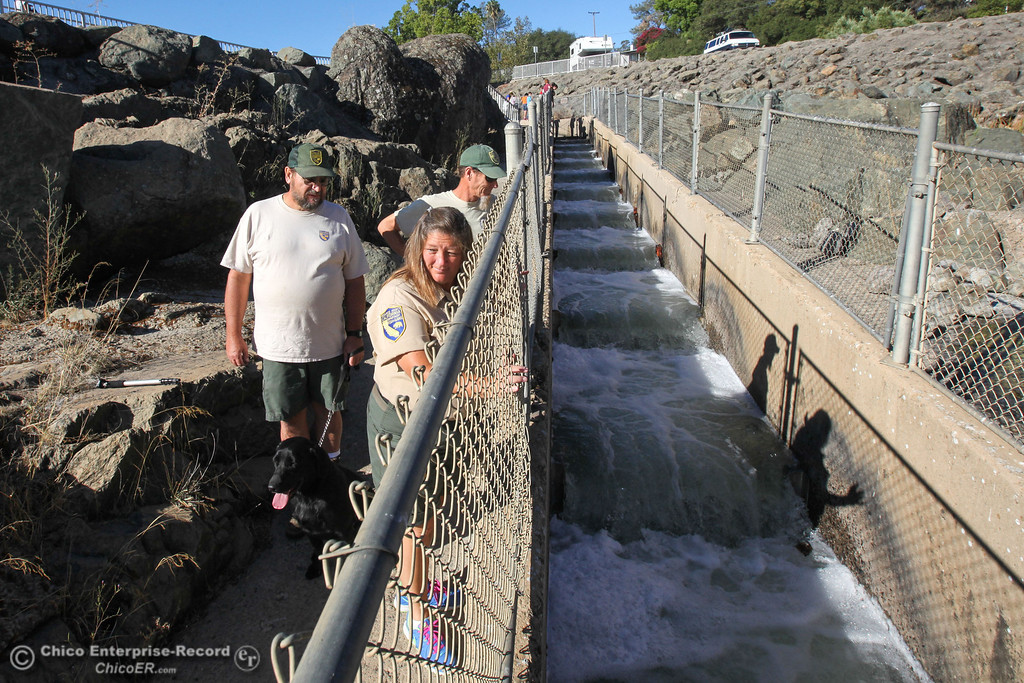 Description of . Donna Merrill, Steve Brightwell, and Bob Grey (front to back) of the Department of Fish and Wildlife, await the first fish to climb the recently opened fish ladder in Oroville on Monday, September 16, 2013. Salmon and Steelhead will make their way from the diversion dam into the fish hatchery to spawn. (Frank Rebelo/Staff Photo)