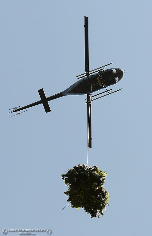 Description of . Bundles of marijuana are hauled out by helicopter as several members of a multi agency Special Enforcement Unit eradicate nearly 7,300 marijuana plants from a remote area in Upper Concow Thursday, Aug. 15, 2013. Two suspects were arrested in the marijuana garden. (Bill Husa/Staff Photo)