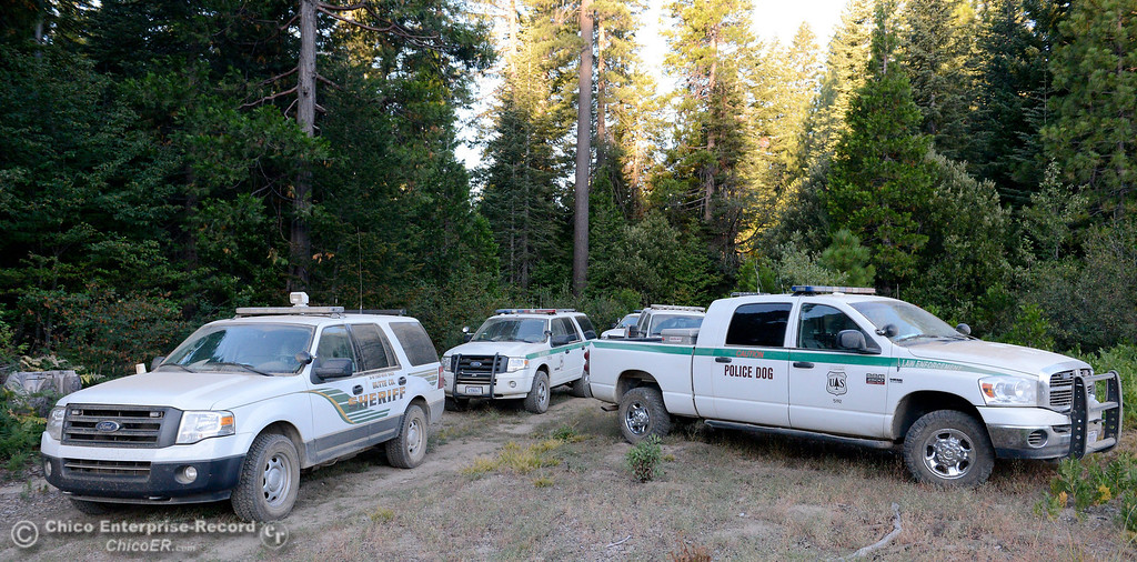 Description of . Multiple law enforcement vehicles caravan into a remote area as several members of a multi agency Special Enforcement Unit eradicate nearly 7,300 marijuana plants from a remote area in Upper Concow Thursday, Aug. 15, 2013. Two suspects were arrested in the marijuana garden. (Bill Husa/Staff Photo)
