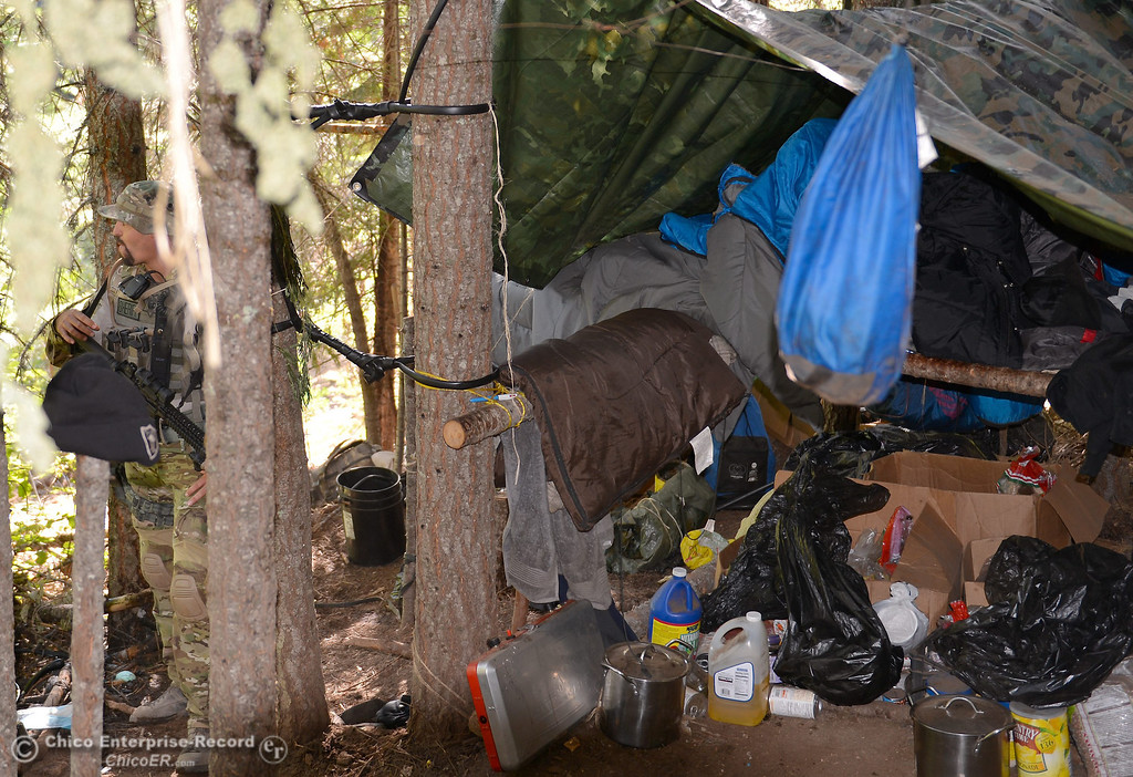 Description of . The cartel style camp includes an elevated sleeping area made from tied sticks and tarps as several members of a multi agency Special Enforcement Unit eradicate nearly 7,300 marijuana plants from a remote area in Upper Concow Thursday, Aug. 15, 2013. Two suspects were arrested in the marijuana garden. (Bill Husa/Staff Photo)