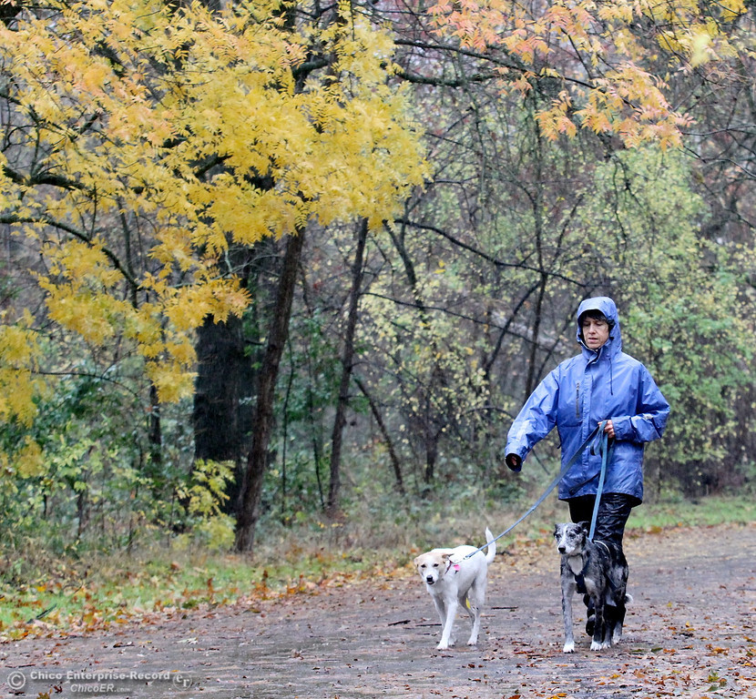 Description of . Becky Lee, of Chico, enjoys a walk through lower Bidwell Park in the rain with her dogs Zelda and Kit on December 4, 2012.  (Bill Husa/Chico Enterprise-Record)