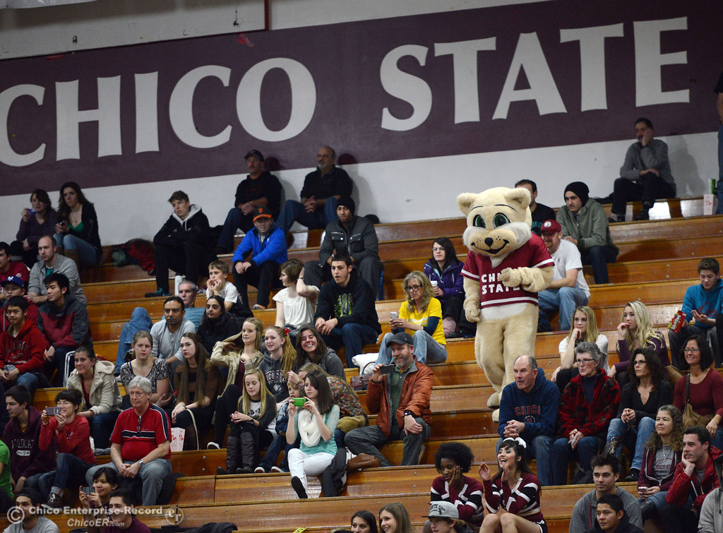 Description of . Willy the Wildcat walks down the stands as Chico State against UC San Diego in the second half of their men's basketball game at CSUC Acker Gym Friday, February 7, 2014 in Chico, Calif.  (Jason Halley/Chico Enterprise-Record)