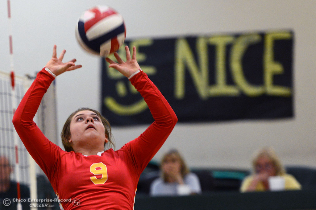 Description of . Chico High's #9 Tiffani Kelly sets the ball against Paradise High in the second game of their girls volleyball match at PHS Thursday, October 10, 2013 in Paradise, Calif.  (Jason Halley/Chico Enterprise-Record)