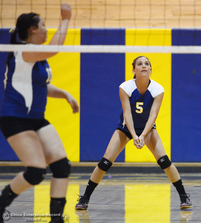 Description of . Hamilton High's #5 Alisyn Silveira readies against Gridley High in their first game of their volleyball match Thursday, August 29, 2013 in Chico, Calif.  (Jason Halley/Chico Enterprise-Record)