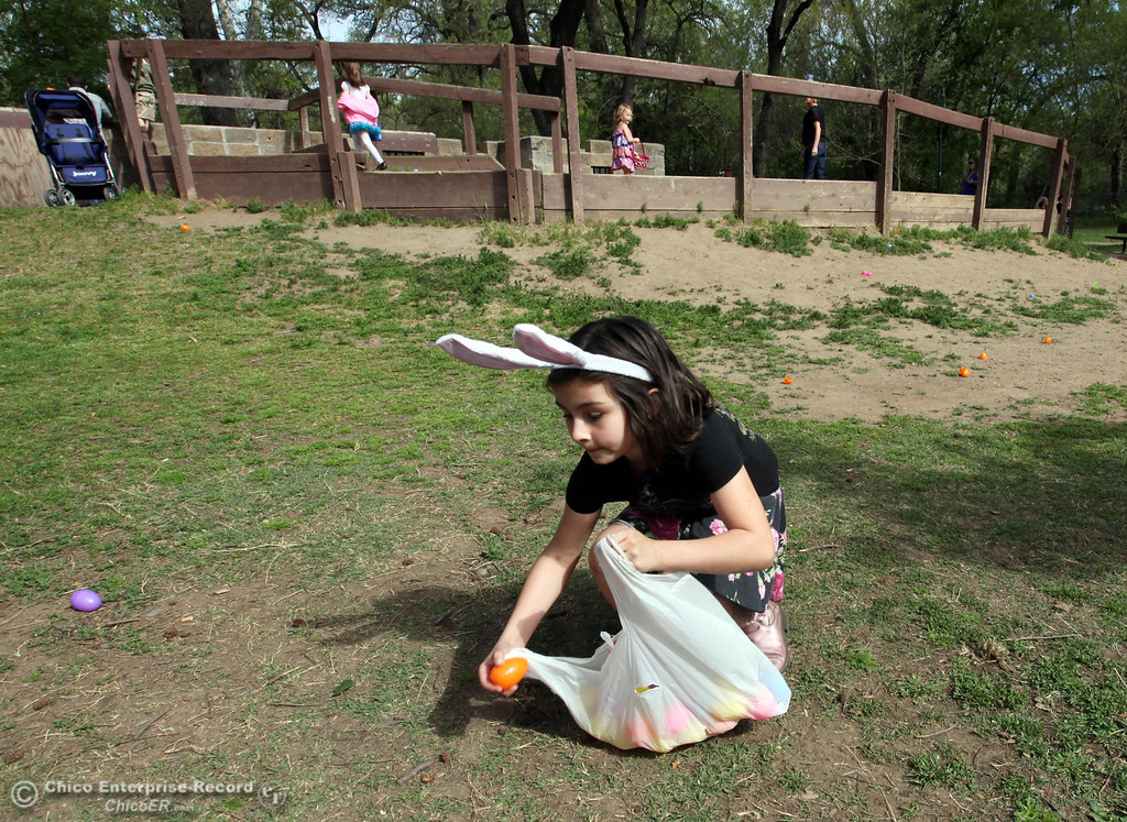 . Ava Thompson, 6, searches for the golden eggs among many colorful eggs during CARD\'s Spring Jamboree at Caper Acres in this file photo from March 2013. (Jason Halley/Chico Enterprise-Record)