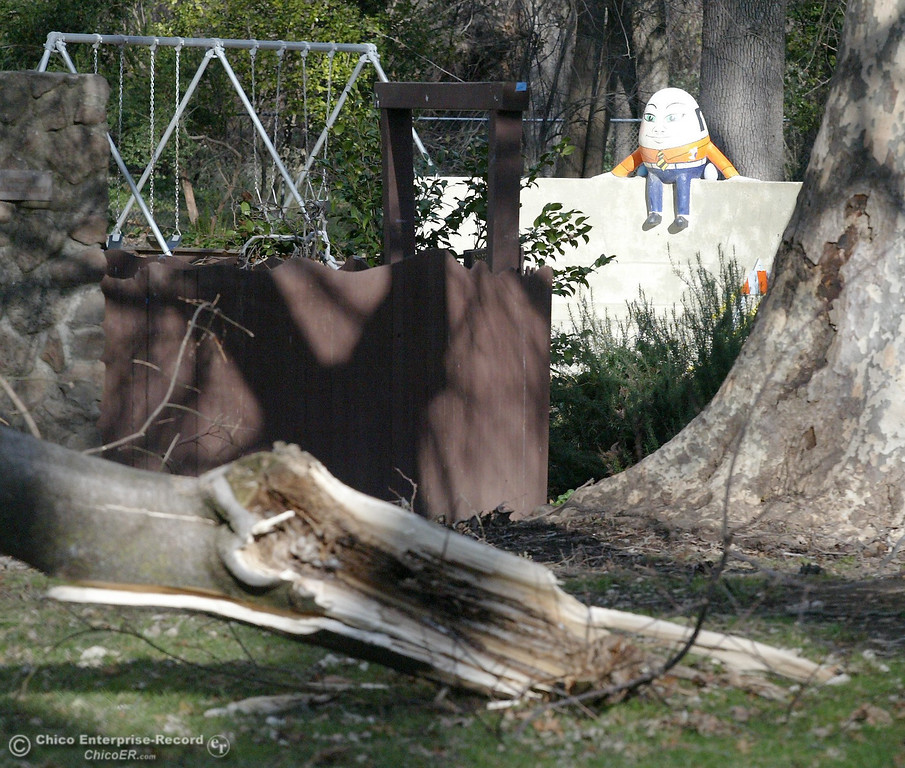 . A broken tree limbs lies on the ground at  Caper Acres in this file photo from January 2008. (Bill Husa/Chico Enterprise-Record)
