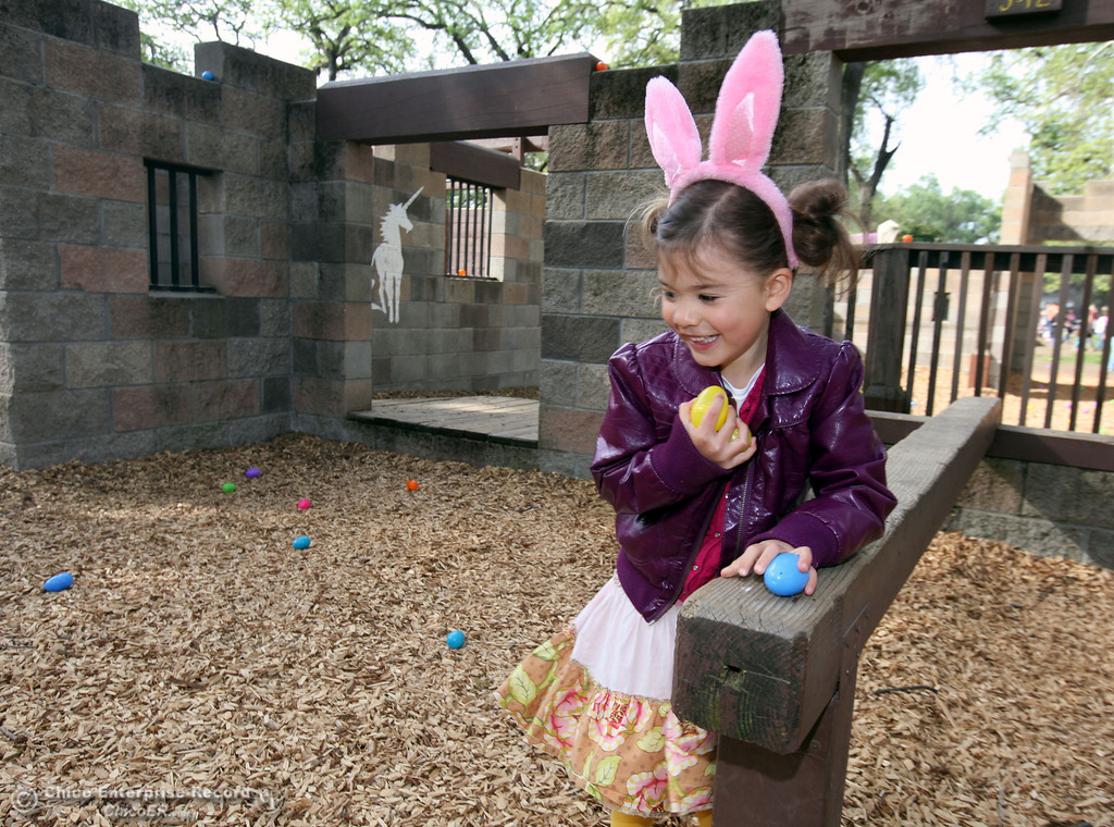 . Ella Hahn, 5,  picks up a bundle of eggs in search for the golden eggs among many colorful eggs during CARD\'s Spring Jamboree at Caper Acres in this file photo from March 2013. (Jason Halley/Chico Enterprise-Record)