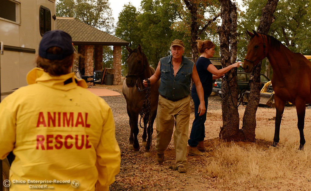 . North Valley Animal Disaster Group Maureen Milligh (left) helps Catherine and Jim Berglund (left to right) transport their two horses Mojo and Gretta from the mandatory evacuation areas around the Swedes Fire southeast of Oroville that were expanded just after noon Saturday, August 17, 2013 in Oroville, Calif.  (Jason Halley/Chico Enterprise-Record)