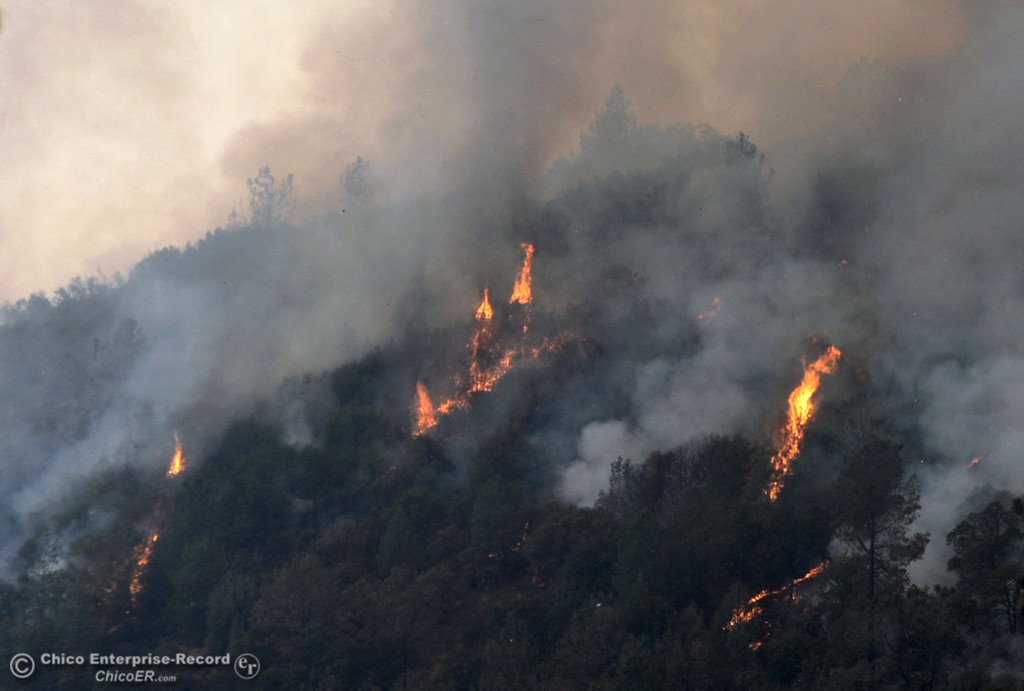 . Flames shoot up from the trees west of Hurleton Swedes Flat Rd. in the mandatory evacuation areas around the Swedes Fire southeast of Oroville that were expanded just after noon Saturday, August 17, 2013 in Oroville, Calif.  (Jason Halley/Chico Enterprise-Record)