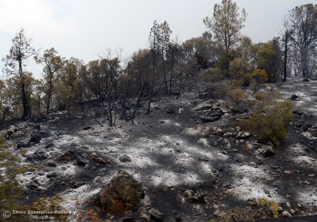 . The charred ground along Swedes Flat Rd. as mandatory evacuation areas around the Swedes Fire southeast of Oroville were expanded just after noon Saturday, August 17, 2013 in Oroville, Calif.  (Jason Halley/Chico Enterprise-Record)