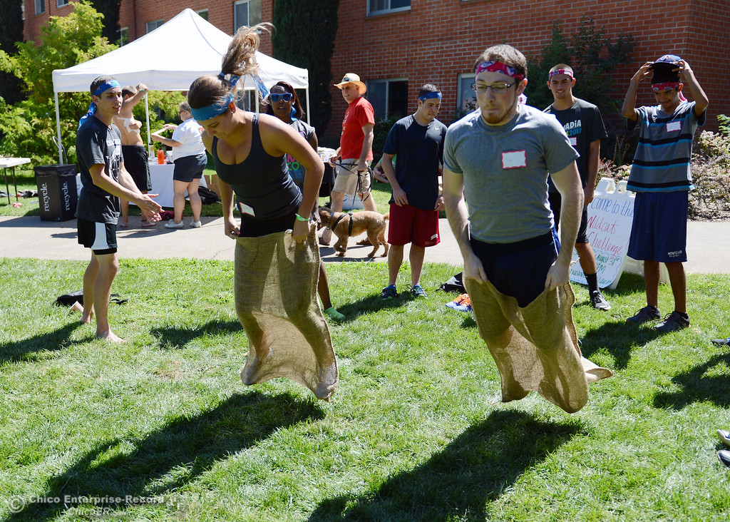 . Chico State students Madison Hossfeld, 18 (left) races Taylor Moffitt, 21 (right) in a sack race as an alternative activity to floating on the Sacramento River for Labor Day at the Wildcat Challenge event on the lawn between Lassen Hall and Sutter Hall on the Chico State Campus Saturday, August 31, 2013 in Chico, Calif.  (Jason Halley/Chico Enterprise-Record)