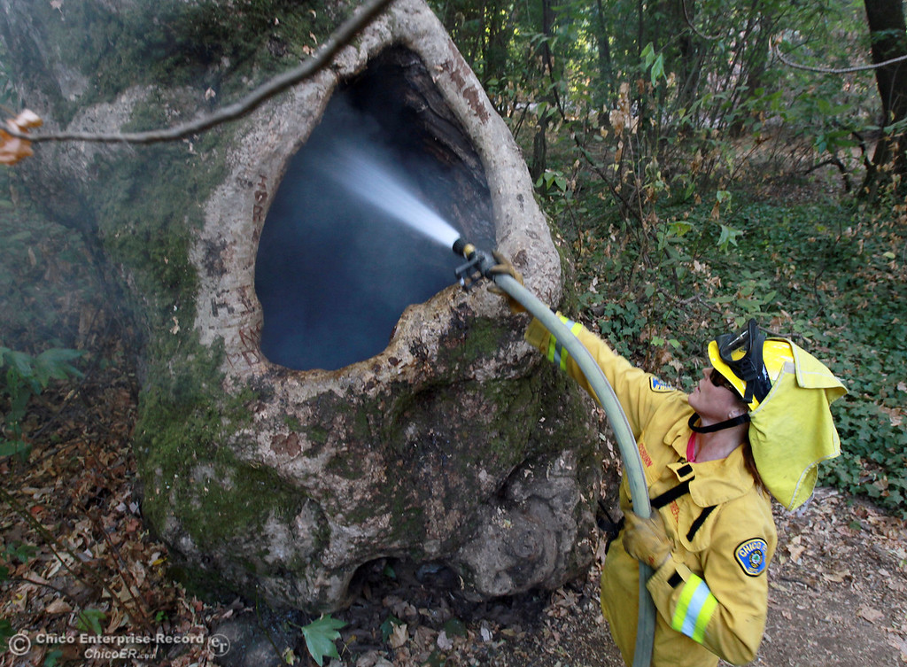 . Chico firefighter Gina Osburn hoses inside a hollowed tree that smolders as they responds to three spot fires in a homeless encampment in lower Bidwell Park east of Caper Acres along South Park Dr. on October 10, 2012 in Chico, Calif.  (Jason Halley /Chico Enterprise-Record)