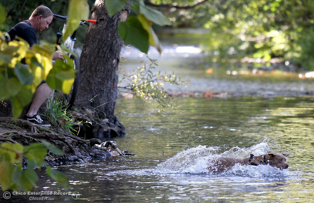 """. Mike Naron, of Chico, enjoys the colors of Fall along Big Chico Creek in lower Bidwell Park while his girlfriends\' dog \""""Wookie\"""" plays in the water on October 18, 2012. (Bill Husa/Chico Enterprise-Record)"""
