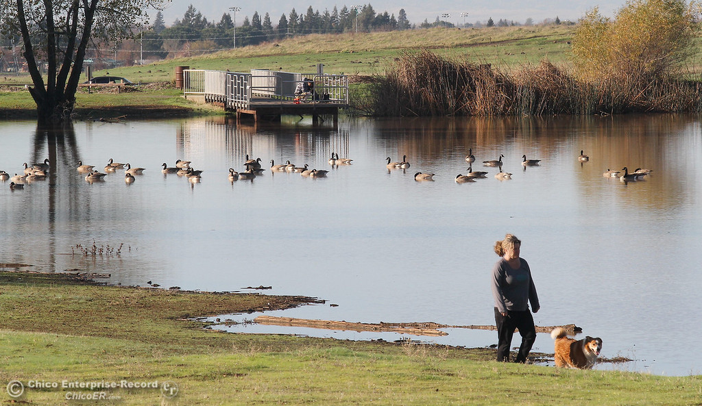. Jackie Evans, of Chico, enjoys a walk around Horseshoe Lake in upper Bidwell Park with her dog Sam while a flock of Canada geese hang out at the lake on December 7, 2012.  (Bill Husa/Chico Enterprise-Record)