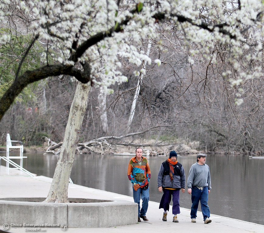 . Patrick Hennessey of Asheville, NC, Mur Earthman of San Francisco and Roger Braddy of Chico (left to right) walk near a tree in full bloom as the skies above begin to turn gray near Sycamore Pool at One Mile Recreation Area of lower Bidwell Park on February 18, 2013. (Bill Husa/Chico Enterprise-Record)