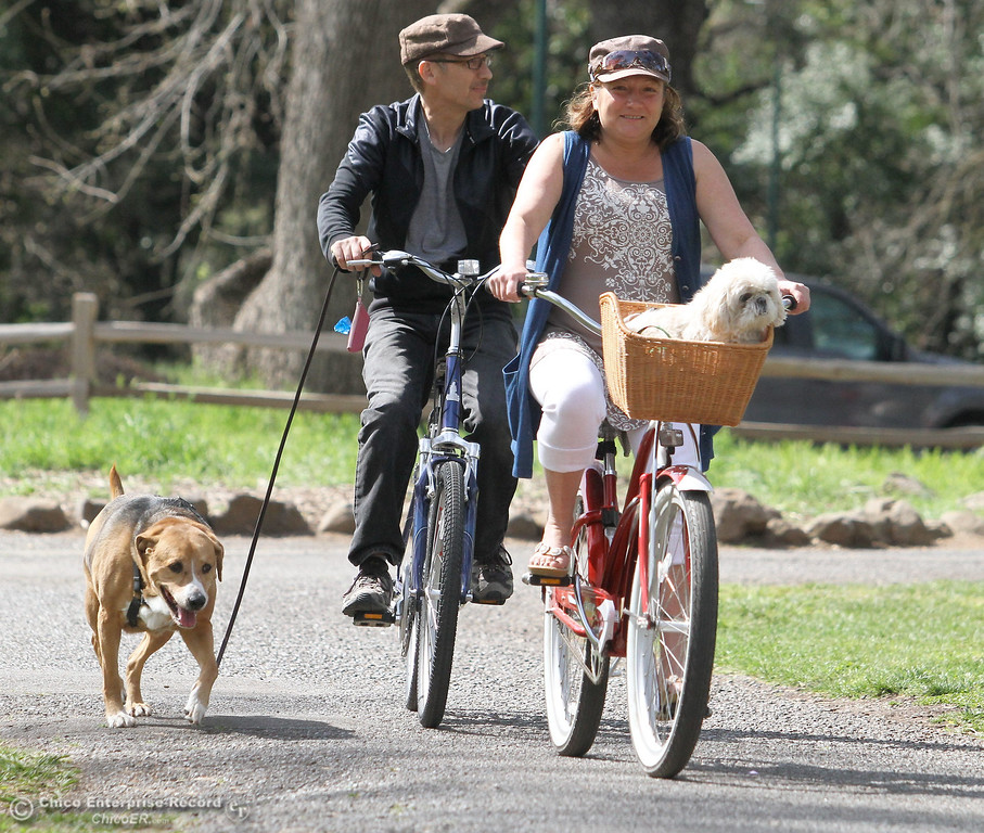 ". Lynn Shaw, of Chico, gives ""Chewey\"" a ride on her bike while Mark Shaw walks \""Rosey\"" in lower Bidwell Park on March 18, 2013. (Bill Husa/Staff Photo)"