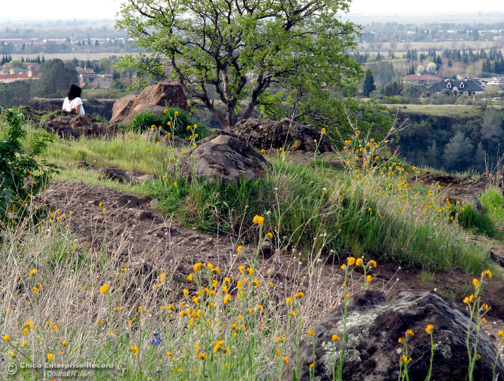 . A park visitor enjoys the view of Chico in upper Bidwell Park on March 14, 2013. (Bill Husa/Staff Photo)