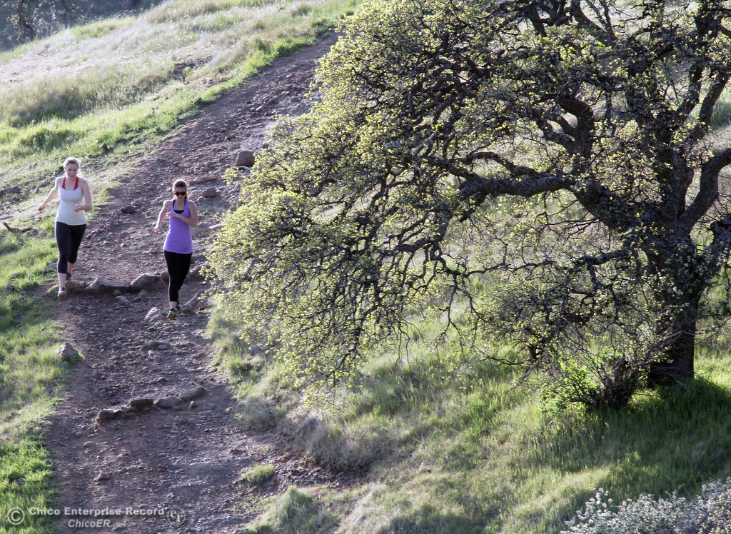 . Runners race down a trail as people enjoy the warm weather in upper Bidwell Park on March 13, 2013 in Chico, Calif.  (Jason Halley/Chico Enterprise-Record)